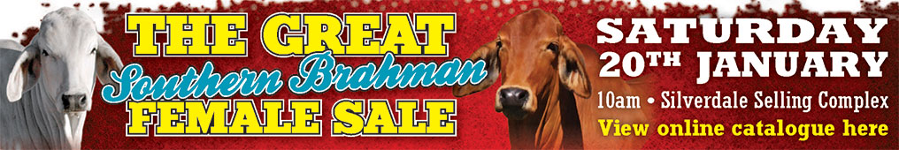 the great southern brahman female sale 2018 web banner