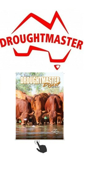 Droughtmaster Sale