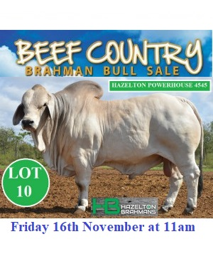 BEEF COUNTRY SALE