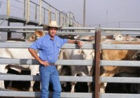 Mareeba Cattle Market