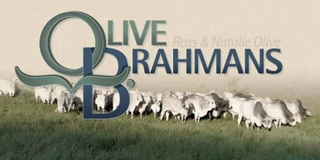 The family exporting Australian Brahman cows to Thailand