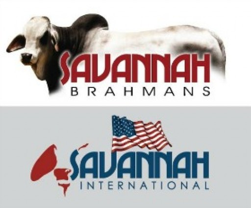 Savannah Brahmans & Savannah International